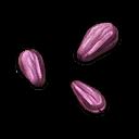 Turnip Seed