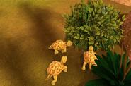 Proganochelys Babies