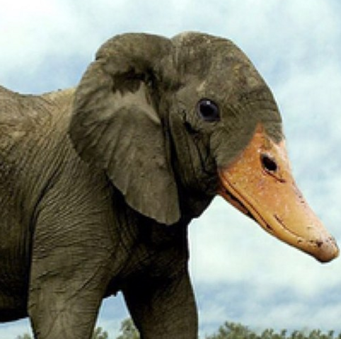 File:ELEPHANT DUCK.png