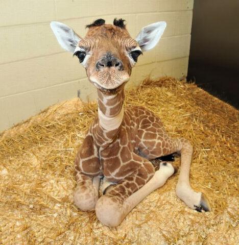 File:Cute-baby-animals-2.jpg