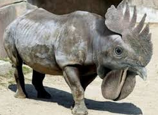 File:RHINO ROOSTER.png