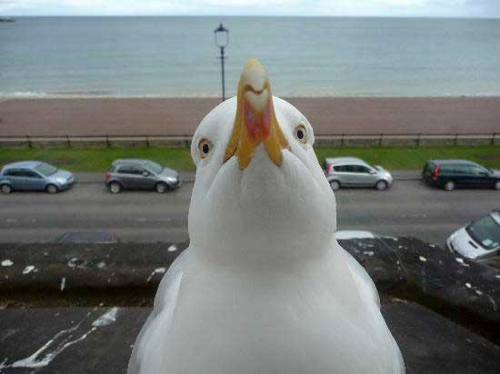 File:Seagull.jpg