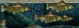 C3stickletrout ingame