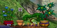 Tea Time Plants