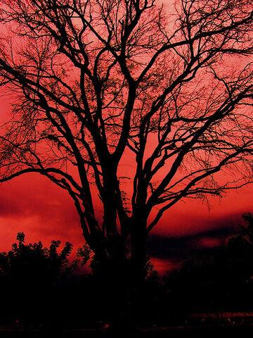 File:Old Devil Tree 老妖树.jpg
