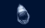 Shark-attack-art