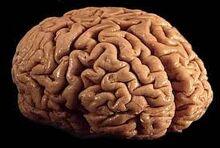 Brain-0