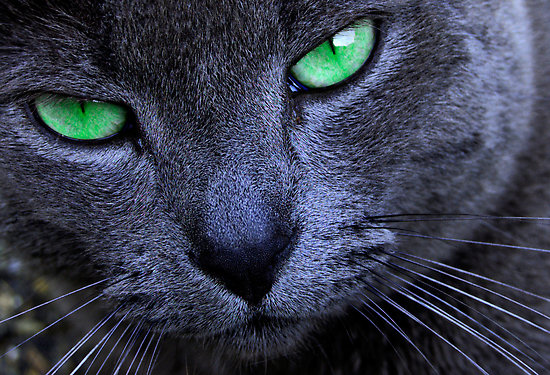 File:The Cat's Eyes.jpg