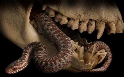 File:Venomous.jpg