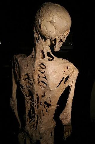File:Bonehive.jpg