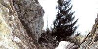 The Lichen Beast