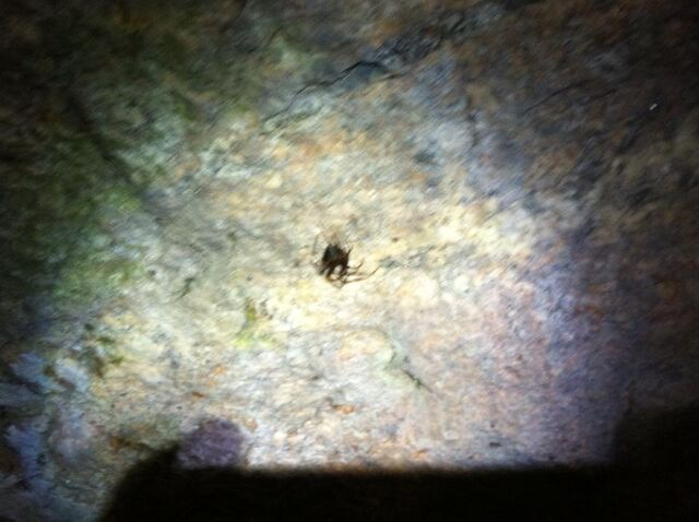 File:Another blurry spider.jpg