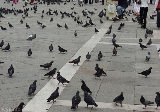 File:Pigeons Duomo Florence 550 l.jpg