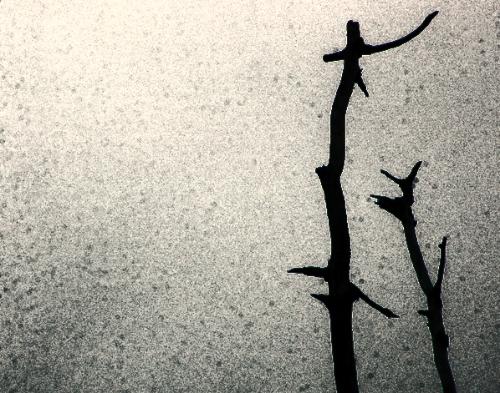 File:Snag tree.jpg
