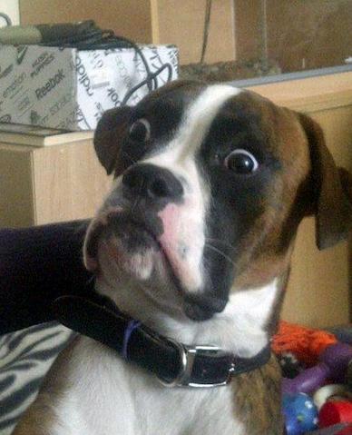 File:Shocked dog.png