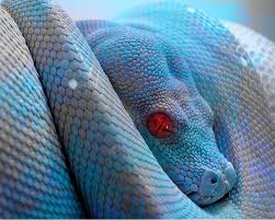 File:Blue snake.png