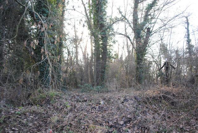 File:Slender forest 4.jpg