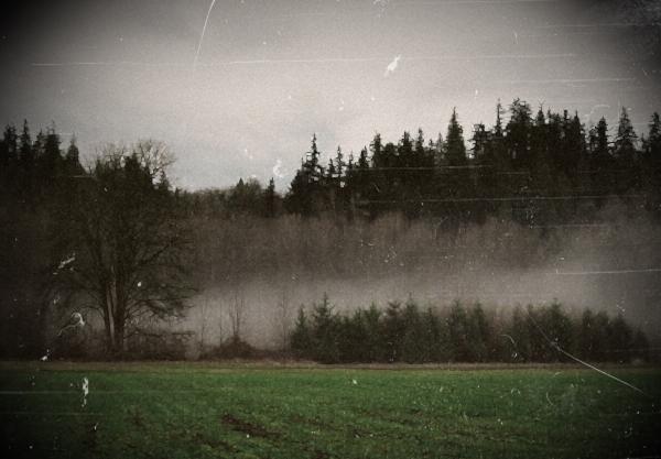 File:Foggy field.jpg
