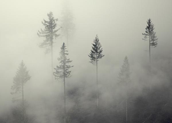 File:Ghostly-ghost-fog-shawn-hill-johnson.jpg