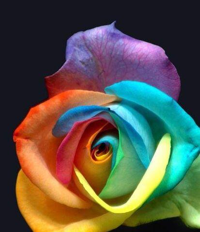 File:Holder of Eternal Life Flower.jpg