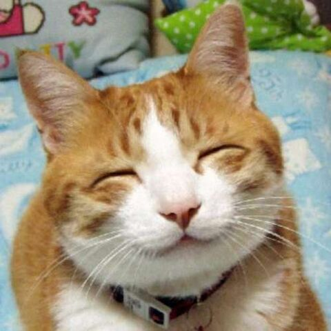 File:Catface.jpg