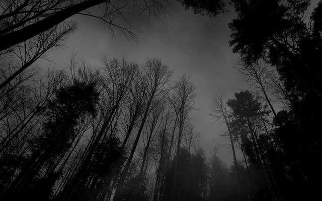 File:Black-and-white-backgrounds-tumblrtumblr-static-forest-black-white-dark-forest-wallpaper-wallpines-tzx1mqky.jpg