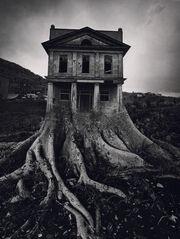 Ju tree house