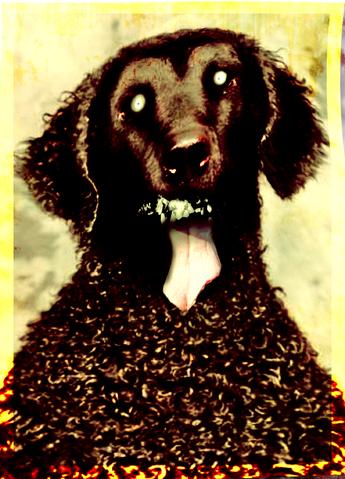 File:Greying dog.png