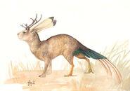 201102 illo acker jackalope 10