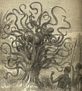 The ya-te-veo tree