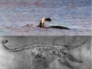 281881-cryptozoology-champ-compared-with-plesioaur
