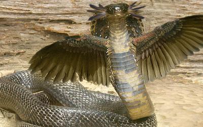 Winged cobra by dragonfly929-d33rh66