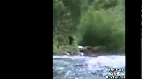 Bigfoot caught on tape at McKenzie River