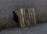Chicken graffiti overpass