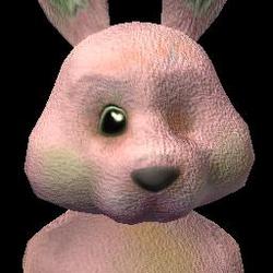 Social Bunny (2) FC