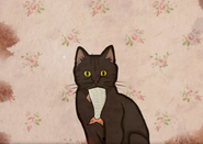 CatBirthday4