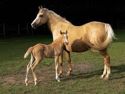 Horsessss