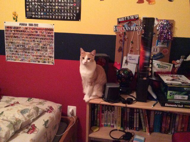 File:The Cat-ck Case.jpg