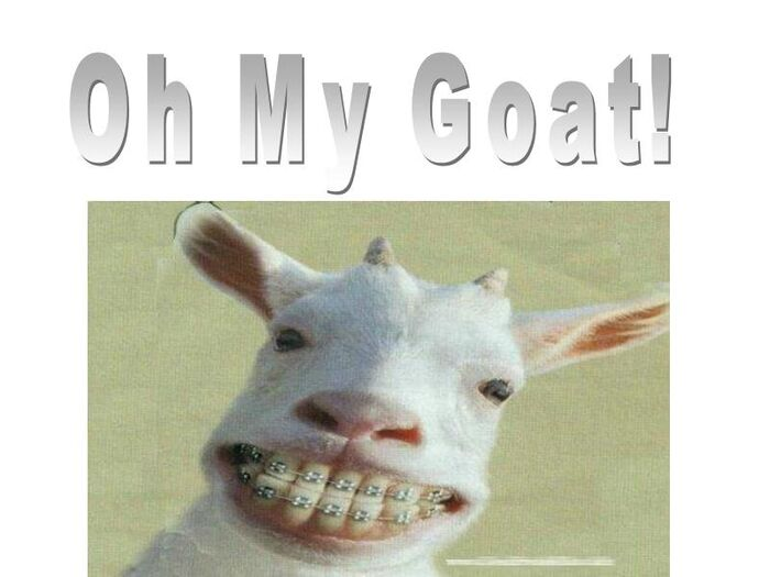 Oh My Goat!
