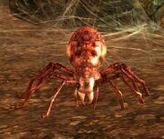 Doom Spider