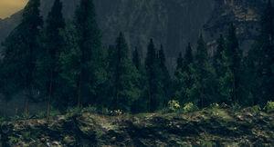 Royal wood01.jpg