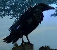 Giant crow02