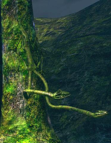 File:Tree lizard.jpg