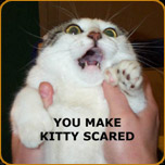 File:Scared kitty.jpg