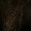 Icon talking tree