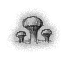 Icon mushroom glade