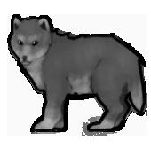 Wolf lvl1