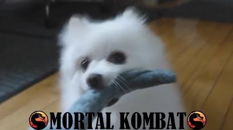 Gabe the Dog - Mortal Kombat-0
