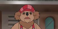 Cody Koala