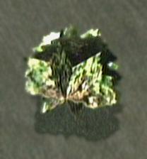 File:Dead rising lettuce.jpg